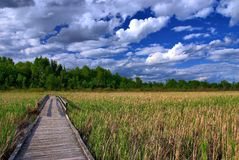 Boardwalk Cuts Through Marsh. A boardwalk through a peat bog. Overhead the afternoon clouds are starting to build up Stock Image