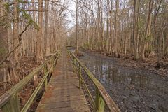 Boardwalk through a Cypress Forest. In the Santee Coastal Reserve in South Carolina stock photos