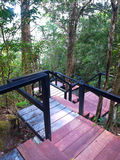 Boardwalk in deep forest Stock Photography