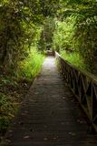 Boardwalk in dense rainforest Stock Image