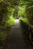 Boardwalk in dense rainforest Stock Image