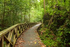 Boardwalk in dense rainforest Stock Photos