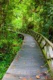 Boardwalk in dense rainforest Royalty Free Stock Image
