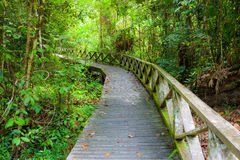 Boardwalk in dense rainforest Royalty Free Stock Photos