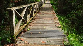 Boardwalk in dense rainforest Stock Photo