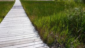 Boardwalk dock through grassy Beach out to the water Stock Photography