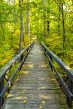 Boardwalk drewniani łączenia w bujny zielenieją las w północnych drewnach Zdjęcia Stock