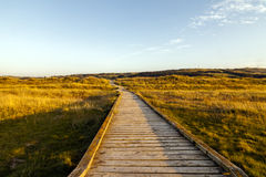 Boardwalk through the dunes in late summer Stock Images