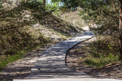 Boardwalk in the dunes and pine forest. royalty free stock photos