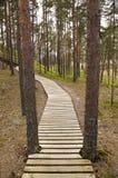 Boardwalk in Estonian forest Stock Photo