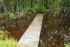 Boardwalk in the Everglades, Florida stock photos