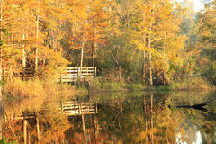 Boardwalk Through the Fall Cypress Swamp Stock Image