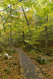 Boardwalk in a Fall Forest - Ontario, Canada Stock Photo