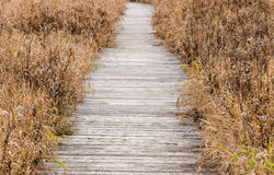 Boardwalk in fall Royalty Free Stock Images