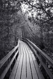 Boardwalk in the Forest Stock Images