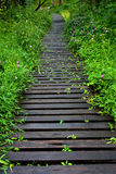 Boardwalk in forest. Surrounded with nature, flower, tree and plant Royalty Free Stock Photos