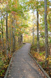 Boardwalk through the forest Stock Photography