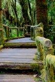 Boardwalk in forest Stock Photos