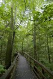 Boardwalk in forest. Boardwalk curving through lush forest Stock Image