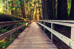 Boardwalk in forest Royalty Free Stock Photography