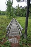 Boardwalk through a Forest Bog Royalty Free Stock Images