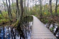 Boardwalk through forest landscape Stock Photography