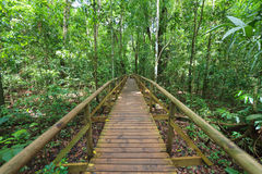 Boardwalk in forest Manuel Antonio. Costa Rica stock photography