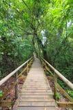 Boardwalk in forest Manuel Antonio. Costa Rica royalty free stock photos