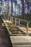 Boardwalk in forest Stock Photo