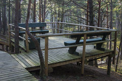 Boardwalk in forest Royalty Free Stock Images