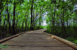Boardwalk through forest reserve Stock Photo