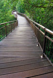 Nature Boardwalk through forest reserve stock photo