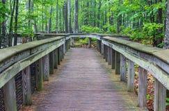 A boardwalk through the forest, still wet after a rain. Stock Photos