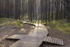 Boardwalk in forest Stock Photography