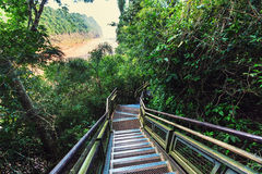 Boardwalk in forest Stock Image
