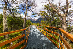 Boardwalk in forest Royalty Free Stock Image