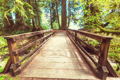 Boardwalk in the forest Royalty Free Stock Images