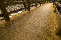 Boardwalk at the forest Royalty Free Stock Photo