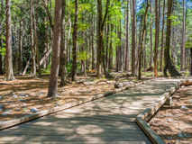 Boardwalk in forest at Yosemite National Park, California, USA Royalty Free Stock Photo
