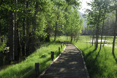 Boardwalk through a forest in Yosemite Valley Stock Images