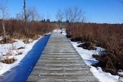 Boardwalk through frozen swamp Royalty Free Stock Photo