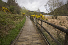 Boardwalk at Glendalough, County Wicklow, Ireland stock image