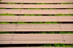 Boardwalk and grass Royalty Free Stock Photo