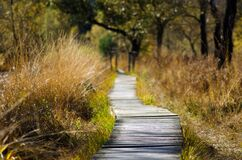 Boardwalk in grasslands Royalty Free Stock Photo