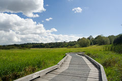 Boardwalk on green field. Boradwalk on green field with blue sky and puffy clouds Royalty Free Stock Photo