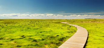 Boardwalk through green field Stock Image