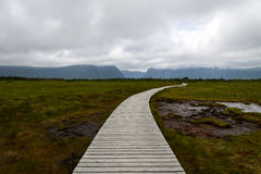 Boardwalk in  Gros Morne National Park. Newfoundland, Canada Royalty Free Stock Image