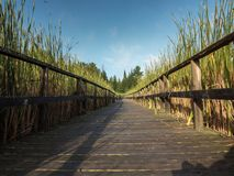 Boardwalk Hiking Trail. At Ken Reid Conservation Area Royalty Free Stock Image