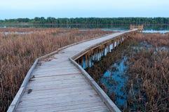 Boardwalk i bagno w Minnestoa rzeki rezerwacie dzikiej przyrody Zdjęcie Royalty Free