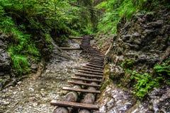 Boardwalk i skog Royaltyfri Foto